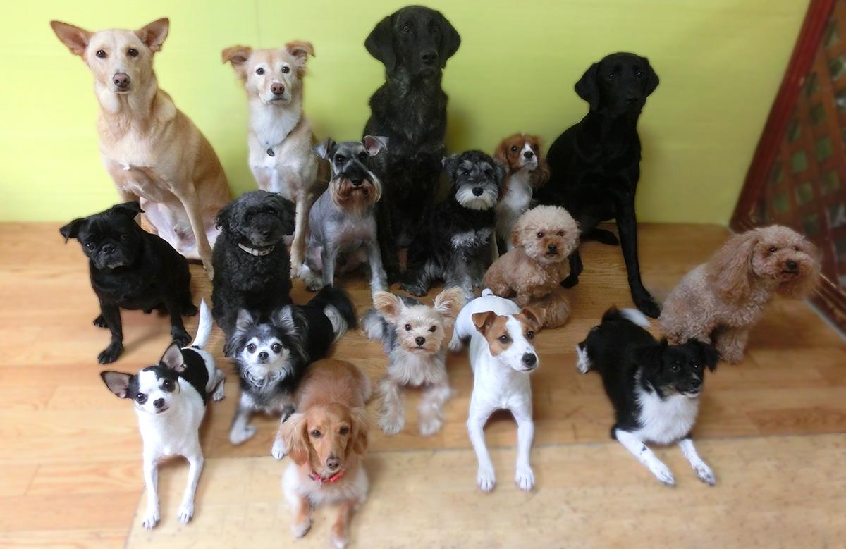 犬の保育園生全員集合!