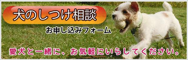 犬のしつけ無料相談お申し込みフォーム