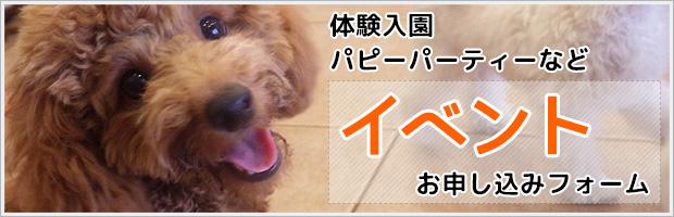 毎月10組限定!犬の保育園体験入園募集中!