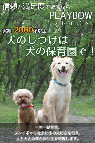 犬のしつけは、犬の保育園で!