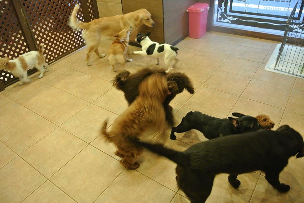 犬同士で遊ぶ社会化レッスン