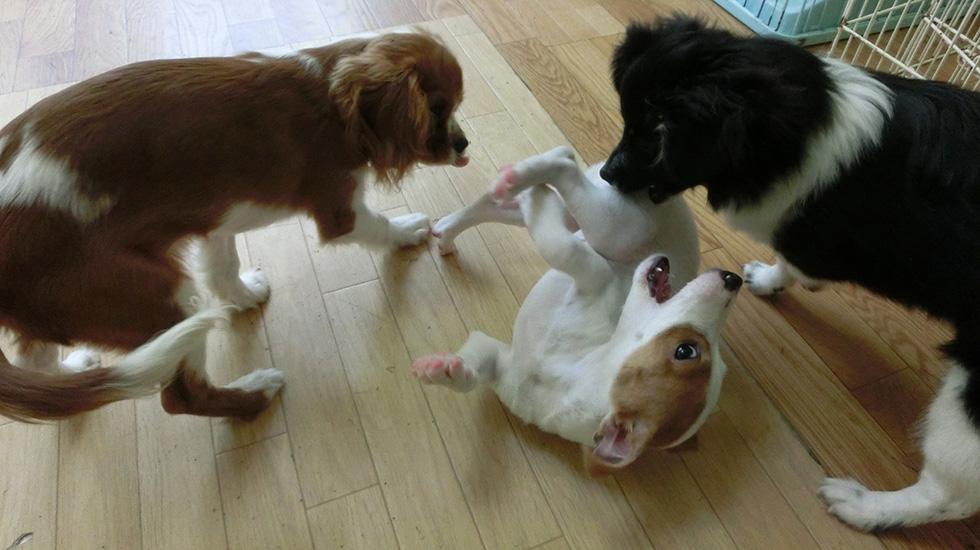 パピーパーティーは犬のしつけ・社会化の第一歩