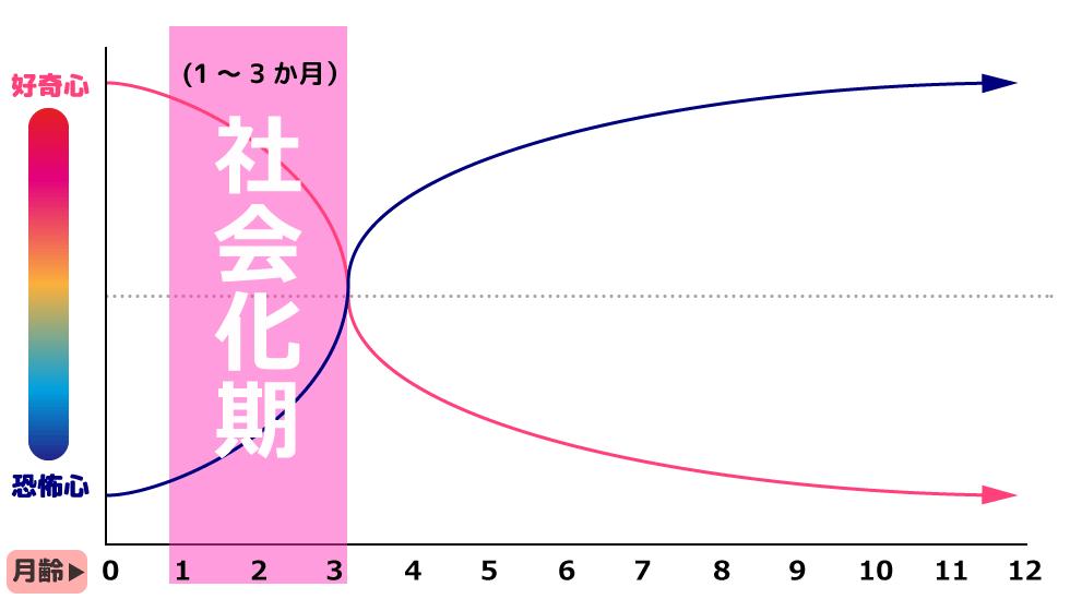 犬の社会化期グラフ