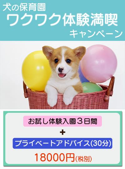 犬の保育園 ワクワク体験満喫キャンペーン