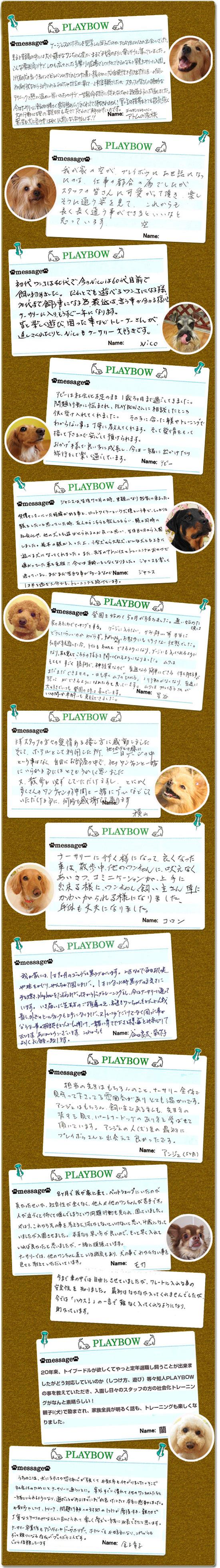 犬の保育園生徒さんの声・飼い主様からのメッセージ