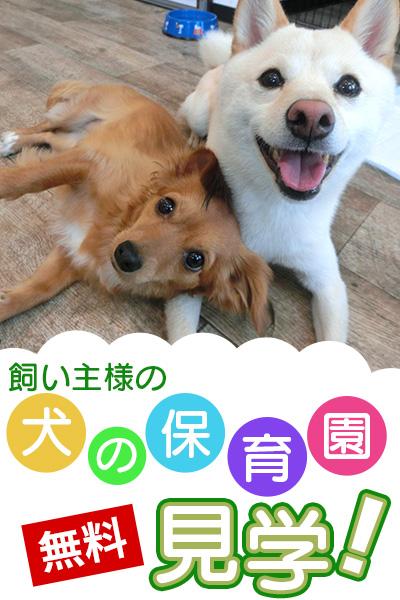 犬の保育園無料見学