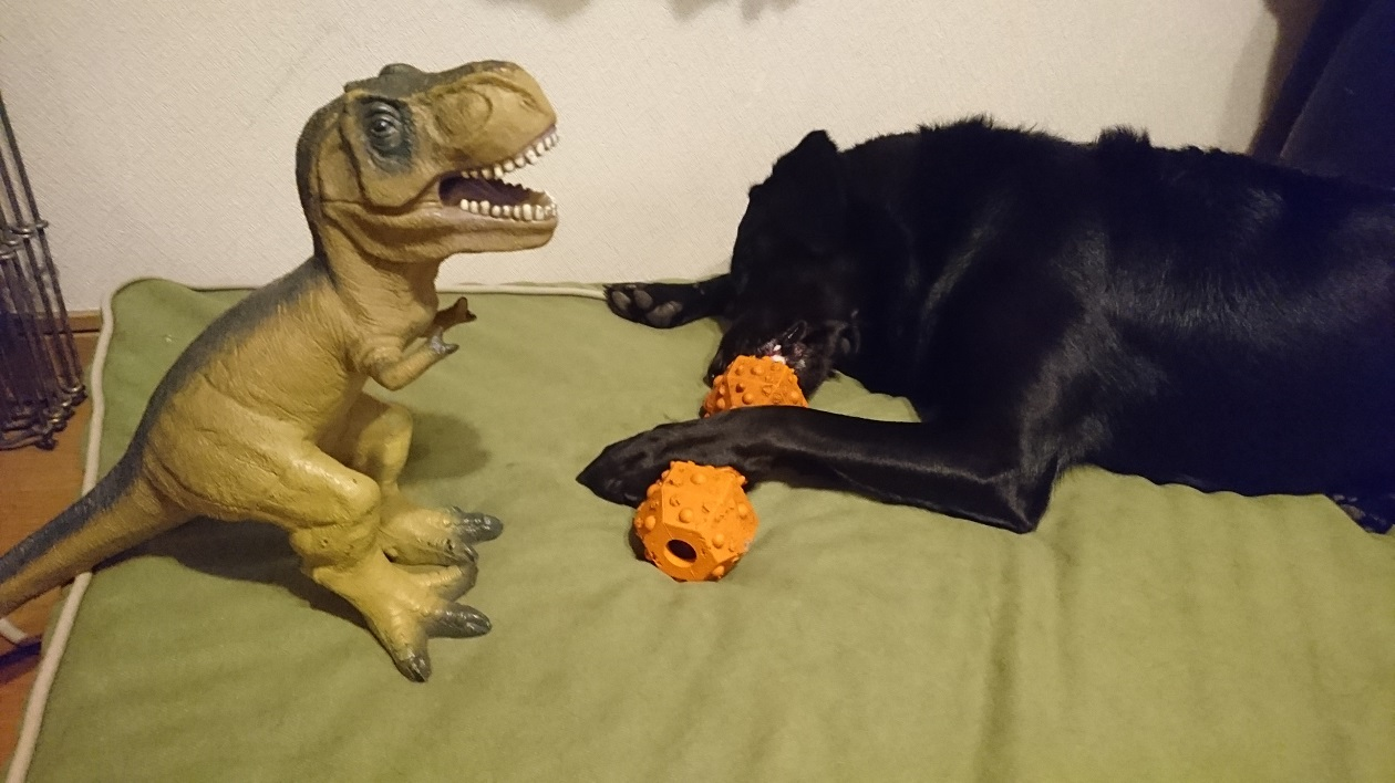 チェルシーこんな状況でも知育玩具!
