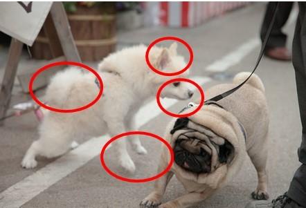 白い犬解説