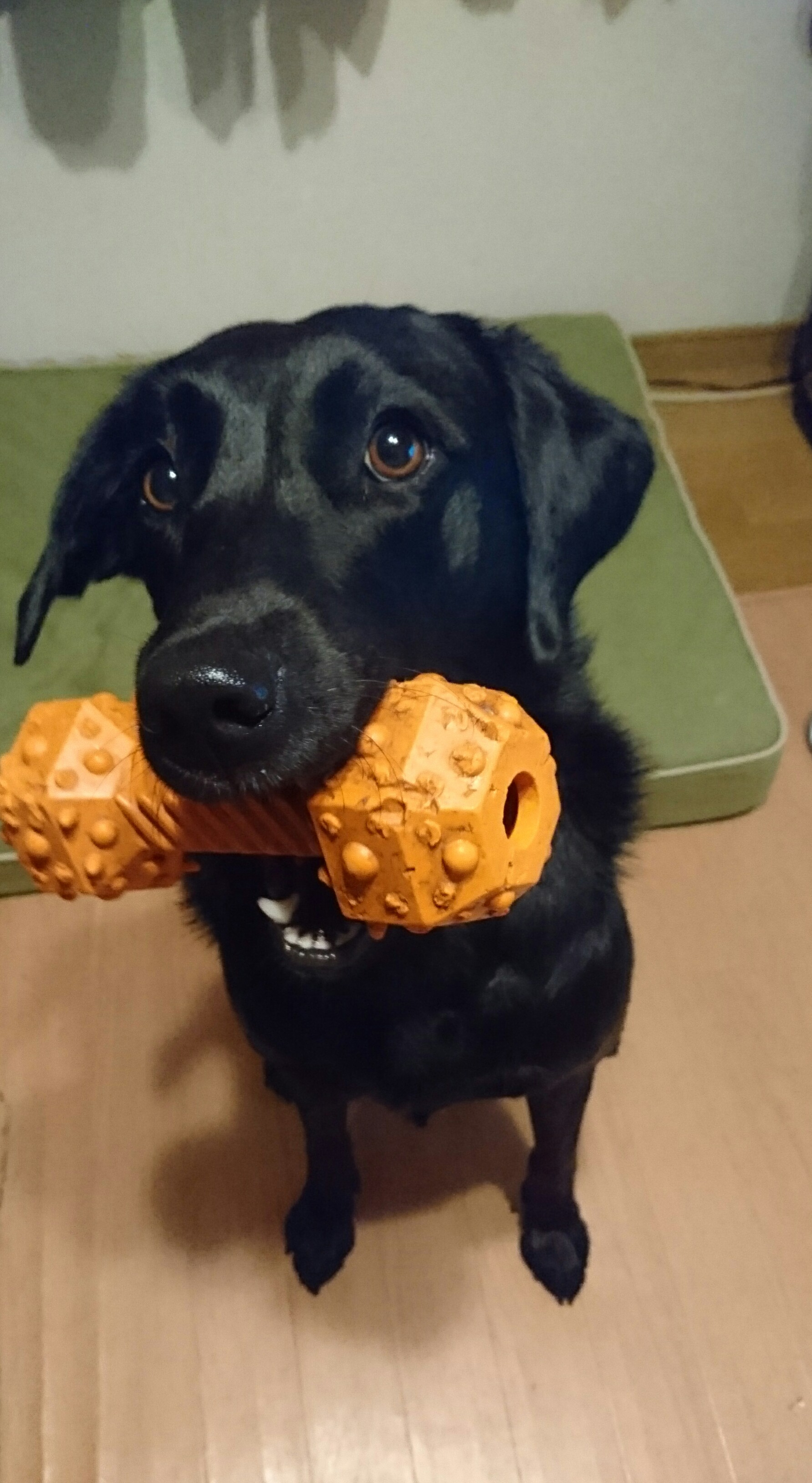 玩具、見つけたよ