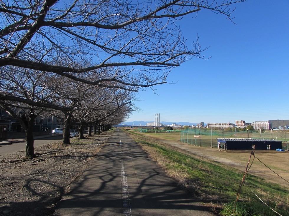 近くには多摩川の遊歩道。お散歩に最適です!
