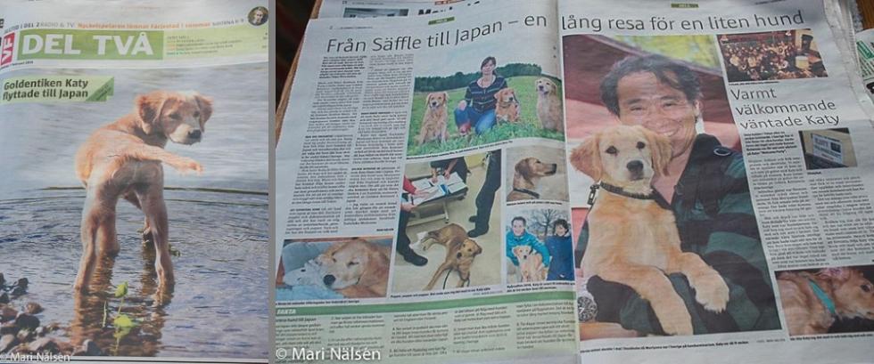 スウェーデンの新聞にプレイボゥ代表森山と愛犬ケイティが取材されました。