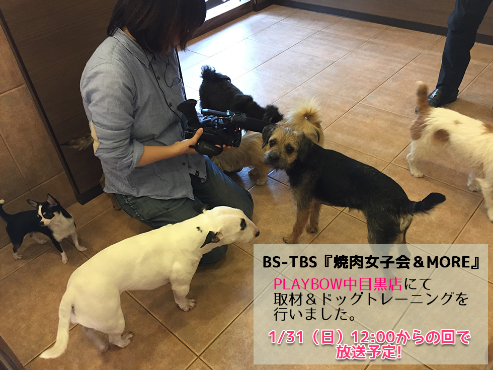 BS-TBS『焼肉女子会&MORE』取材&ドッグトレーニング|PLAYBOW中目黒店